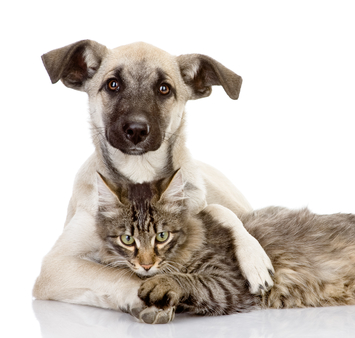 Photo web dog n cat small place on pet pg
